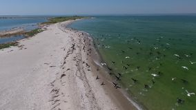 Birds fly up from the shore stock video footage