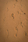 Many footprints on the sand Stock Image