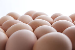 Many fresh brown eggs Stock Photos