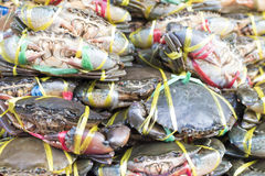 Many fresh crabs. Royalty Free Stock Images