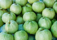 Many fresh green guava in Thailand Royalty Free Stock Photography