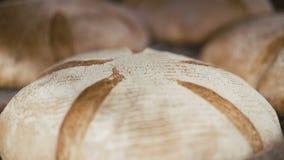 Many fresh loafs of rye bread 4K stock video