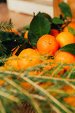 Many fresh mandarins and branches of  Christmas tree on a wooden background Royalty Free Stock Photo