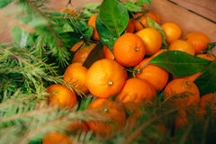 Many fresh mandarins and branches of  Christmas tree on a wooden background Royalty Free Stock Photos