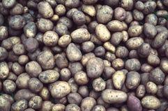 Many fresh organic potatoes in the field. Background of freshly dug potatoes. Kartopli before landing on the field. Tinted photograph village life Stock Photo