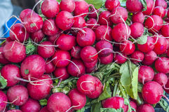 Many fresh radishes on weekly market. Close Stock Photography