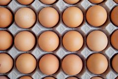 Many fresh raw egg chicken lined up in a row. Flatlay or Top view. Many fresh raw egg chicken lined up in a row. Flatlay or Top view royalty free stock image