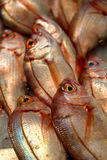 Many fresh red snapper fish in the market. Many fresh red snapper fish (lutjanus) in the market Stock Photo