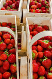 Many fresh red strawberries Royalty Free Stock Photo