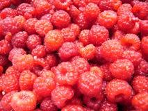 Many fresh, ripe and sweet raspberries, clouseup royalty free stock photo
