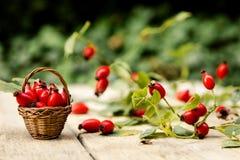 Many Fresh Rose Hips Stock Image