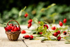 Many fresh rose hips. On a table with basket Stock Image