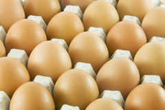 Many fresh rural eggs. Packed in cardboard container Stock Photography
