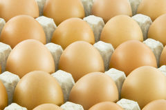 Many fresh rural eggs. Packed in cardboard container Royalty Free Stock Images