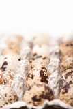 Many fresh speckled quail eggs in cardboard container Royalty Free Stock Images