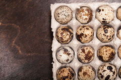 Many fresh speckled quail eggs in cardboard container Royalty Free Stock Photography