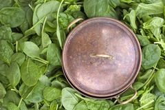 Many Fresh spinach leaves and an old vintage saucepan. Vitamins and health in food. Free space for text. Copy space.  Royalty Free Stock Image