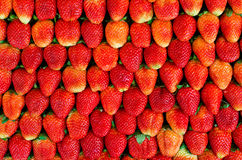 Many fresh strawberries. With good arrangement Royalty Free Stock Images