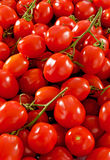 Many fresh tomatoes. Group of many fresh tomatoes royalty free stock images