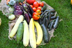 Many fresh vegetables in a garden on Grasd. Some vegetables in a Garden on Grass stock image