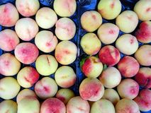 Many Fresh White Peaches Stock Photography