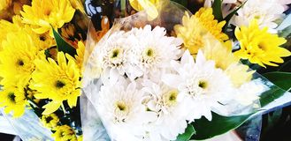 Many fresh white and yellow chrysanthemum for sale on street market stock images