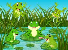 Many frogs on leaf with river scene. Illustration of many frogs on leaf with river scene Stock Images