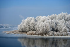 Many of frost on the trees and the reeds growing on the banks of Royalty Free Stock Image