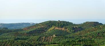 Many fruit trees. Royalty Free Stock Image