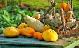 Many fruits and vegetables are for condiments Royalty Free Stock Photos