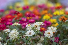 The many full color flowers focus and blur background stock photography