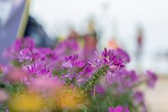 The many full color flowers focus and blur background stock images