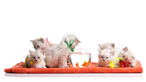 Many funnyl kitten and goldfishes Royalty Free Stock Photo