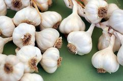 Many garlic Royalty Free Stock Photography