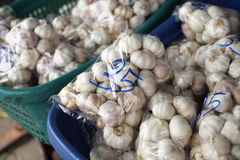 Many garlic in thailand Royalty Free Stock Photography
