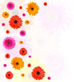Many Gerberas And Blank Place For Text Stock Photo