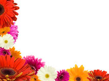 Many Gerberas And Blank Place For Text