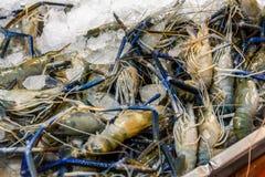 Many giant prawns Rosenberg shrimp. Are on ice royalty free stock image