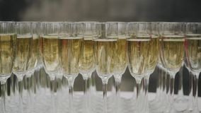 Many glasses of champagne on the table stand stock video