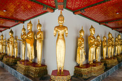 Many of the golden Buddha statue stand Stock Images