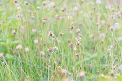 Many grass flowers stock photo