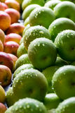 Many Green apples and Red-Yellow apples Stock Images