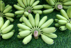 Many green bananas Royalty Free Stock Photography