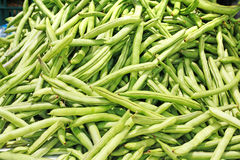 Many green beans, phaseolus vulgaris l. Royalty Free Stock Image