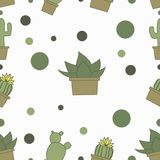 Many cactuses on the white background Royalty Free Stock Photography
