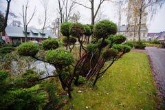 Many green coniferous bushes near pond Stock Photos