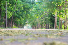 Many green forests are on the side of the road. Royalty Free Stock Images
