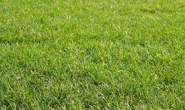 Many green grass close up Stock Photo