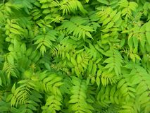 Many green leaves close up stock photo