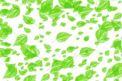 Many green leaves on white background Stock Photo
